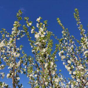 Polkupyöräretki, kukkia taivasta vasten.