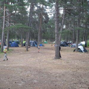 Mäntymetsässä telttoja. Leiriläisten majoitus.